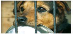 Zbiórka karmy dla zwierząt ze schroniska