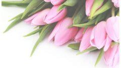 tulipany jpg